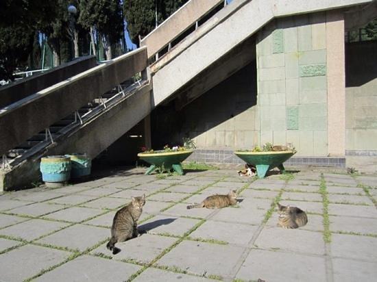 Kirov Holiday Centre : столовая и куча кошек)