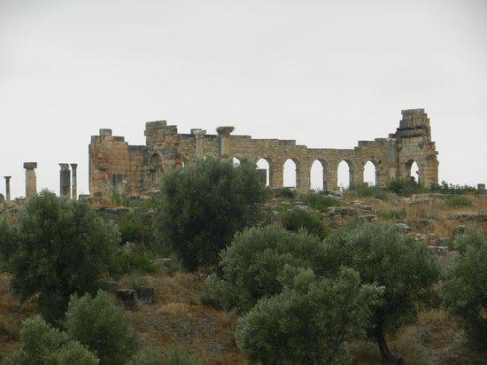 โวลูบิลิส: Roman Ruin, Volubilis, Meknes, Morocco