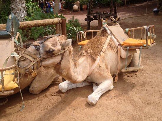 Fuerteventura, Spanien: Visite en chameau (que nous n'avons pas fait...)