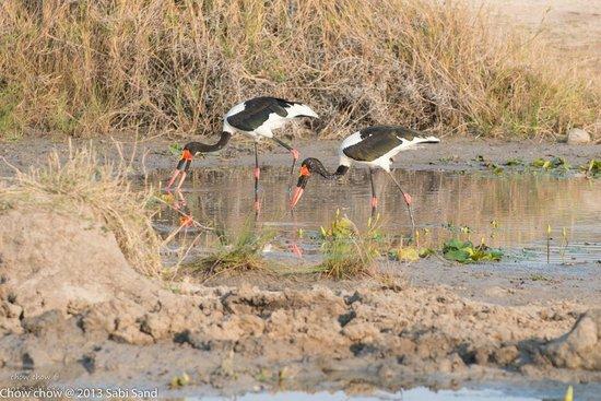Idube Game Reserve Lodge: some birds