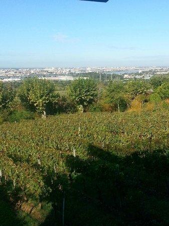 Hotel Le Saint-James Relais & Chateaux : La vigne en premier plan