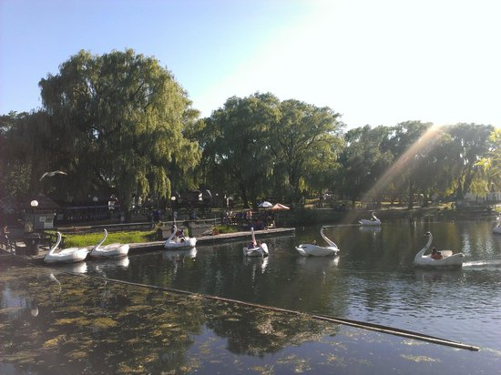 Parc des Îles de Toronto : Swan lake, cozy afternoon to go along the water