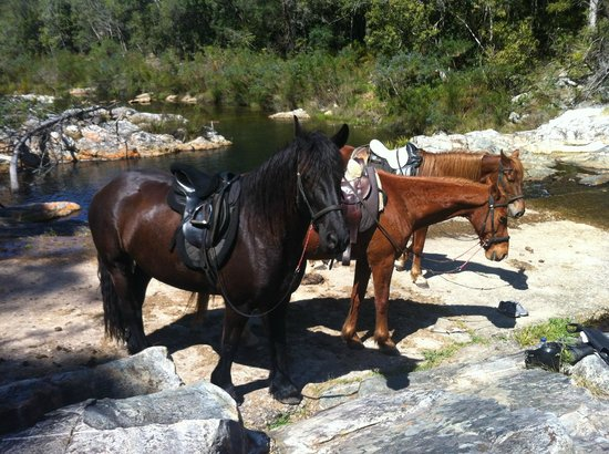 Black Horse Trails: Resting in the sunshine