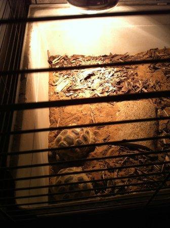 Auchingarrich Wildlife Centre: The Hatchery - tortoises