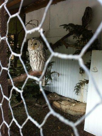 Auchingarrich Wildlife Centre: Owl
