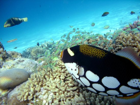 Fihalhohi Island Resort : ESCURSIONE