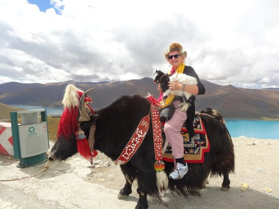 Image result for yak ride