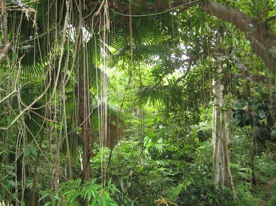 Mamaling Resort Bunaken: Dschungel