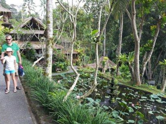 Hotel Tjampuhan & Spa: Lotus pond & Walter Spies house