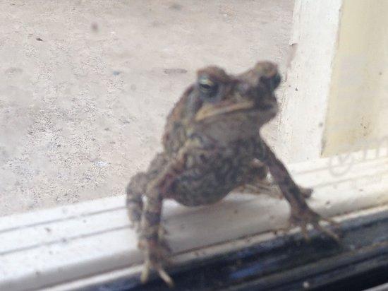 Gecko's Resort: Frogs everywhere at Geckos.