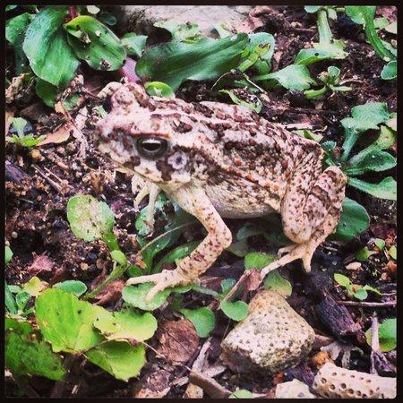 Gecko's Resort : Geckos garden frog