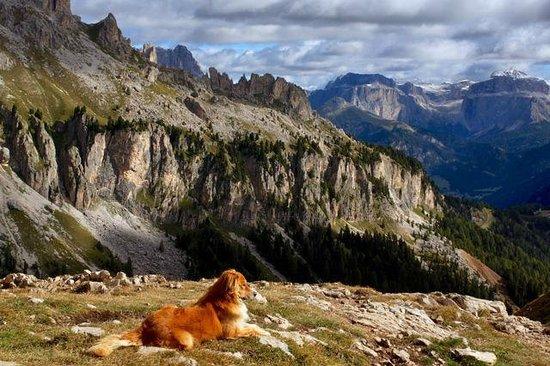 Rifugio Roda di Vaèl : Der Hund vom Koch