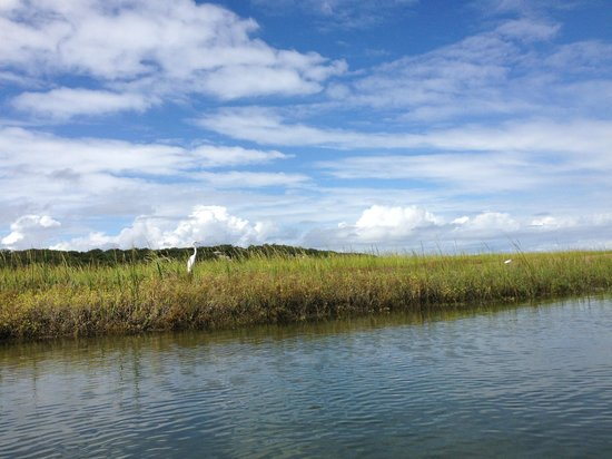 Kayak Amelia: Wildlife on the kayak tour