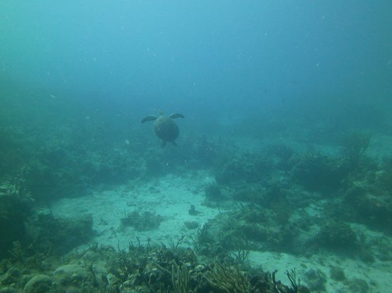 Red Hook Dive Center : Sea Turtle