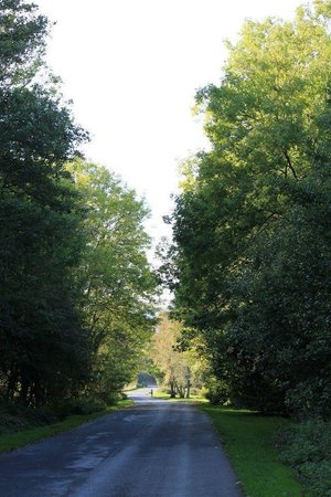 Dare Valley Country Park: The main road up through the park