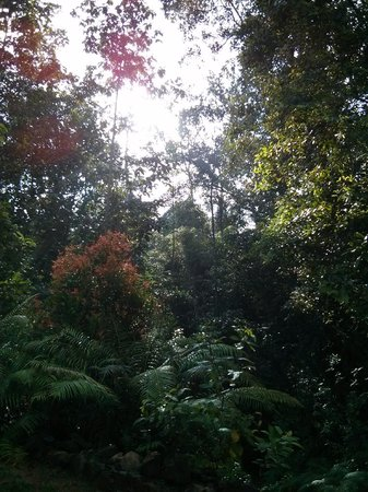 Rainforest Retreat : View