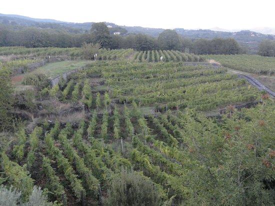 Agriturismo Le case del merlo: vignoble environnant