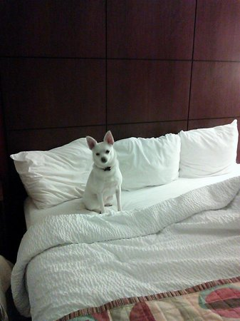 Residence Inn Newport Middletown: A great pet friendly hotel!  Edna loved it!