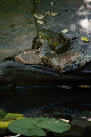 Bella La Vita Inn: Frogs at the koi pond will serenade you.