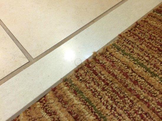 Residence Inn New Orleans Covington/North Shore: Hair on carpet