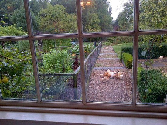 Black Dog Farm B&B : View from the breakfast room