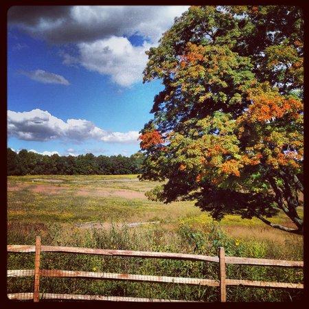 Longwood Gardens: Meadow gardens coming Jan 2014