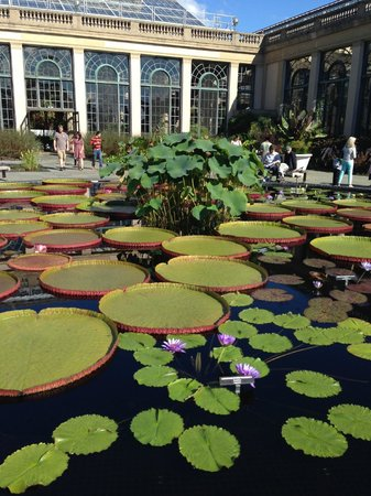 Longwood Gardens: Lilly Pond