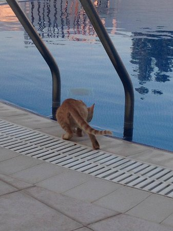 Kitten of Belogna Ikons by the pool...