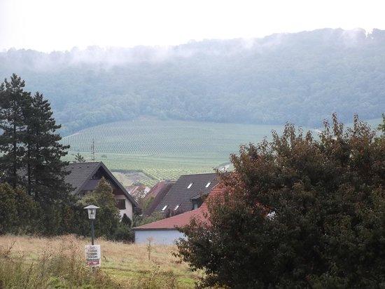 Schwan, Zum Rodelseer: View toward vineyards