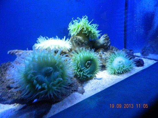 โอเชียนปาร์ค: At the Grand Aquarium
