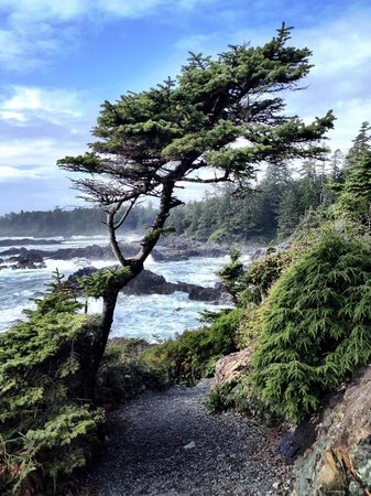 Black Rock Oceanfront Resort: Scene along the Pacific Rim Trail near the hotel