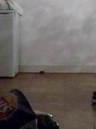 Damrak Apartments: mouse in lounge