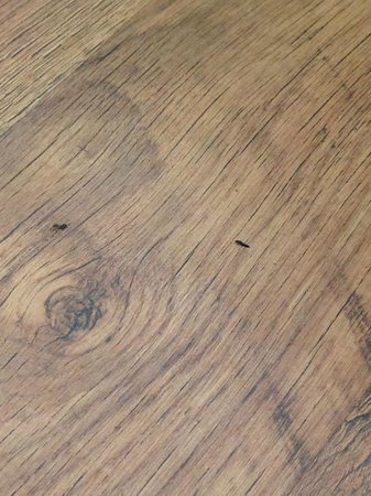Damrak Apartments: mouse droppings on floor