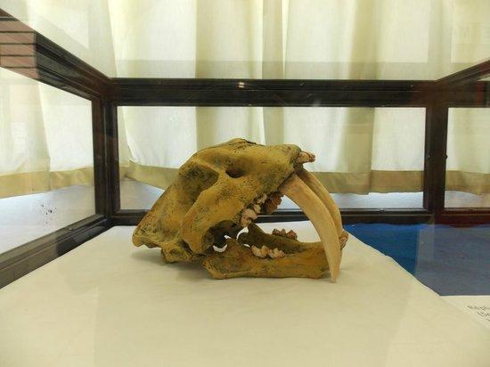 Paleontologia de Marilia Museum