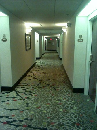 Hampton Inn St. Petersburg: hallway
