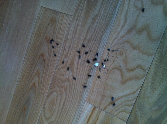 Cabins by the Caves: The dead flies we swept up on our first afternoon in the cabin