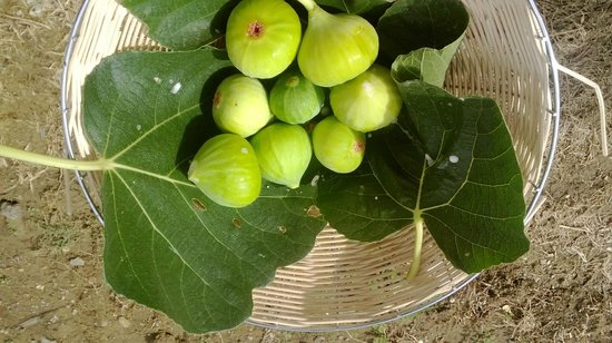 Agriturismo Cetine Vecchie: Fruits