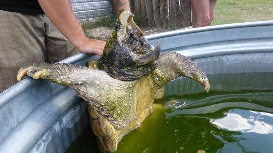 Kliebert's Turtle & Alligator Farm: Way back in Time