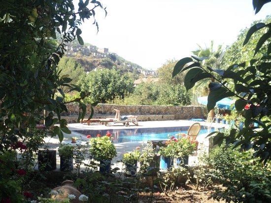 Villa Dimitri: My hammock in the most perfect breezy spot.