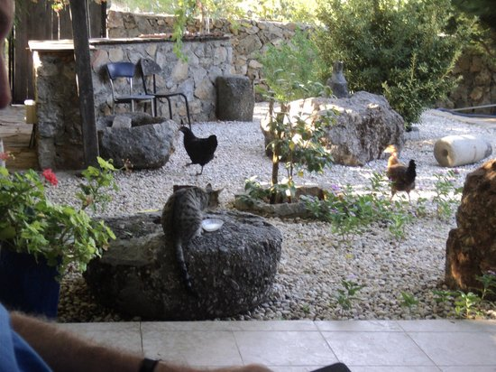 Villa Dimitri: Breakfast Guests