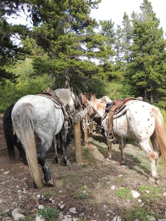 Swan Mountain Outfitters Day Tours: huge horses