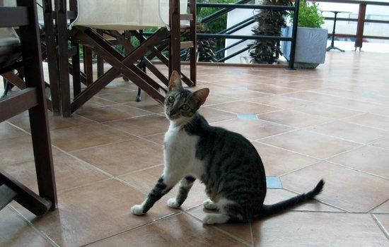 Pylea Beach Hotel: Общительный кот