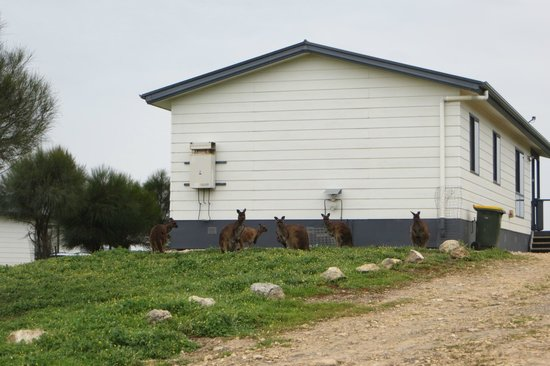 Waves and Wildlife Cottages: Even the Roos don't like the rain. They all huddled up by the cottages