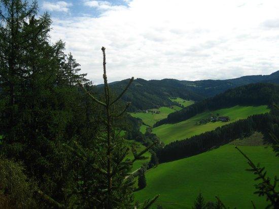Wipfelwanderweg: tree top view