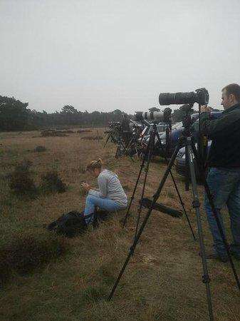 De Hoge Veluwe National Park: Honderden fotografen in de aanslag tijdens de BRONS op de Hoge Veluwe