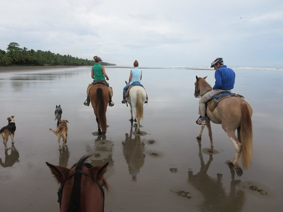 Discovery Horseback Tours: Beach Ride
