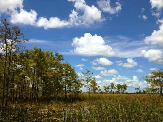 Captain Steve's Swamp Buggy Adventures : beautiful sky from the swamp buggy