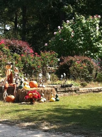 Bar W RV Park and Farm : beautiful fall
