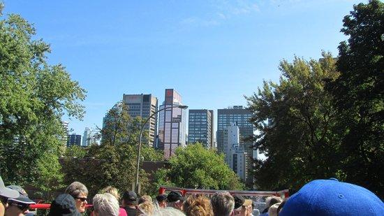 Gray Line: Montreal
