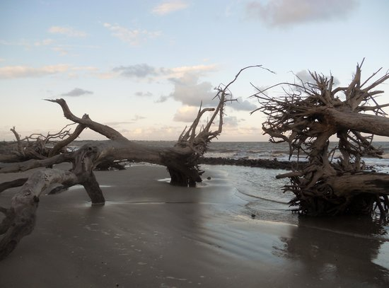 Quality Inn & Suites: Mighty Oaks on Driftwood Beach